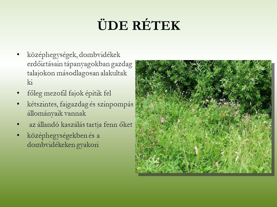 ÜDE RÉTEK középhegységek, dombvidékek erdőirtásain tápanyagokban gazdag talajokon másodlagosan alakultak ki.