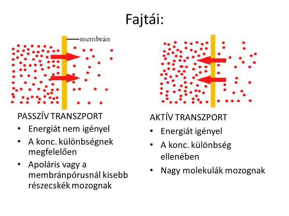 Fajtái: PASSZÍV TRANSZPORT Energiát nem igényel
