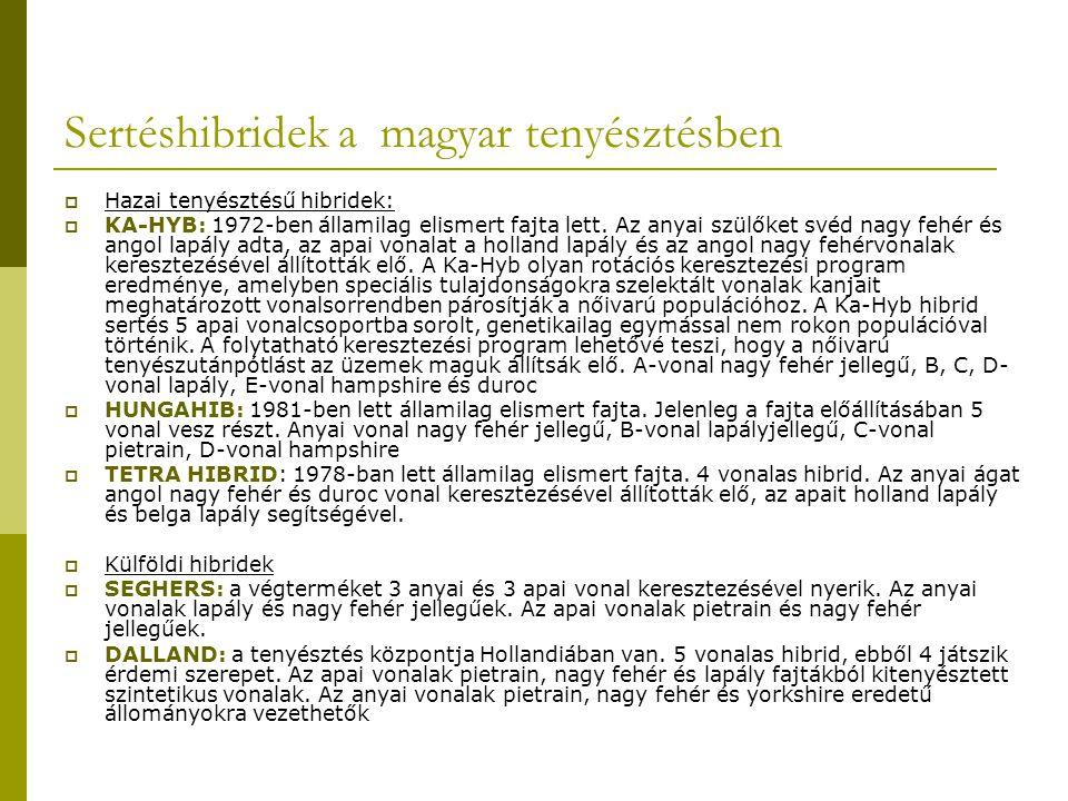 Sertéshibridek a magyar tenyésztésben