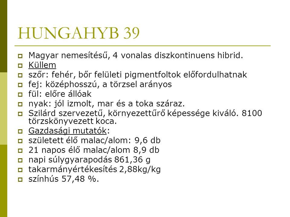 HUNGAHYB 39 Magyar nemesítésű, 4 vonalas diszkontinuens hibrid. Küllem