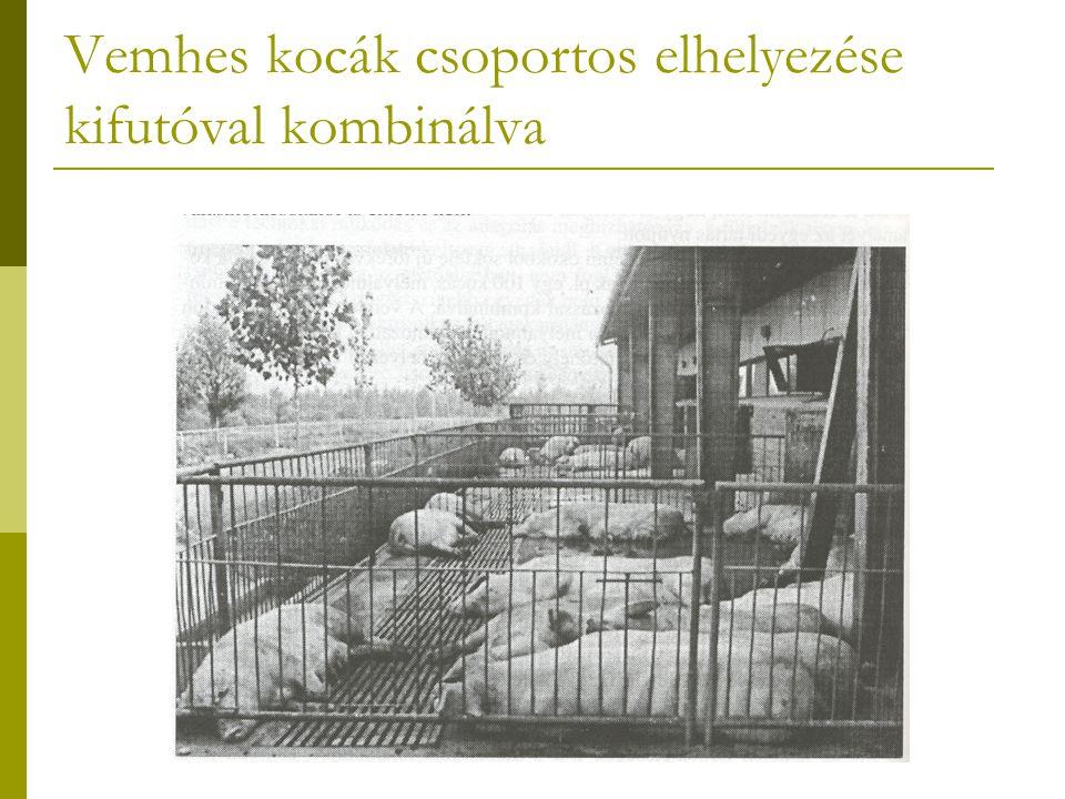 Vemhes kocák csoportos elhelyezése kifutóval kombinálva