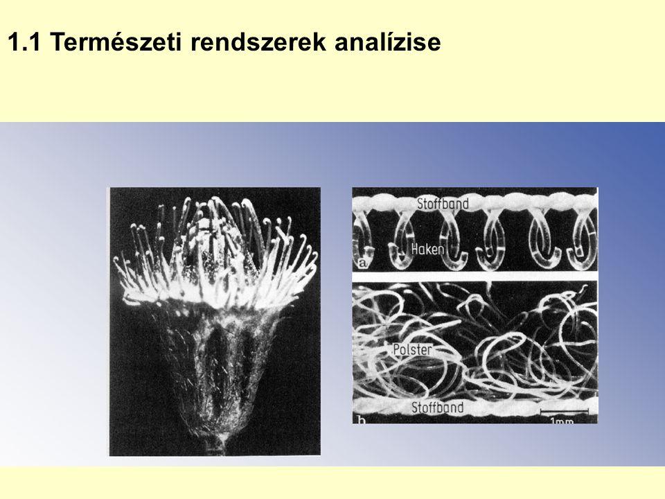 1.1 Természeti rendszerek analízise