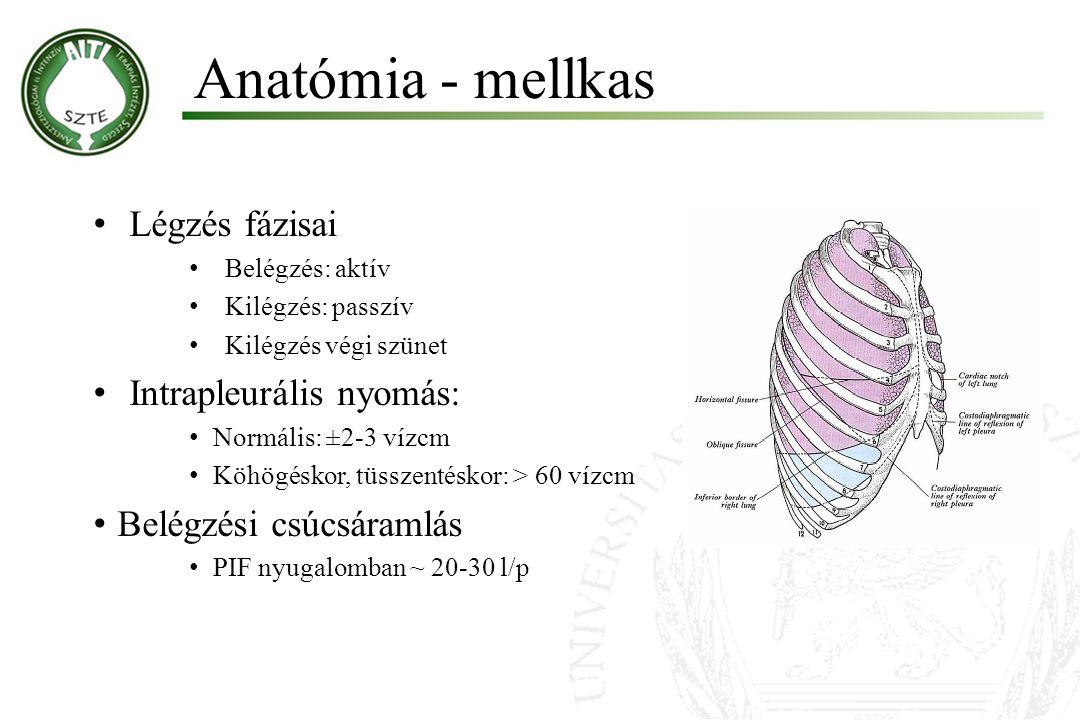 Anatómia - mellkas Légzés fázisai Intrapleurális nyomás: