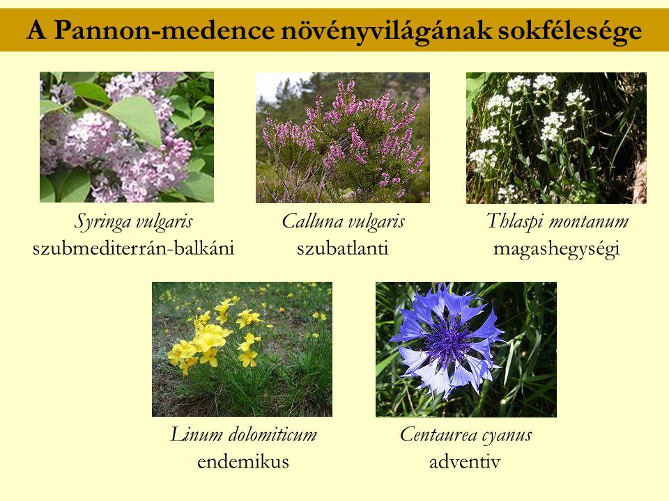 A Pannon-medence növényvilágának sokfélesége