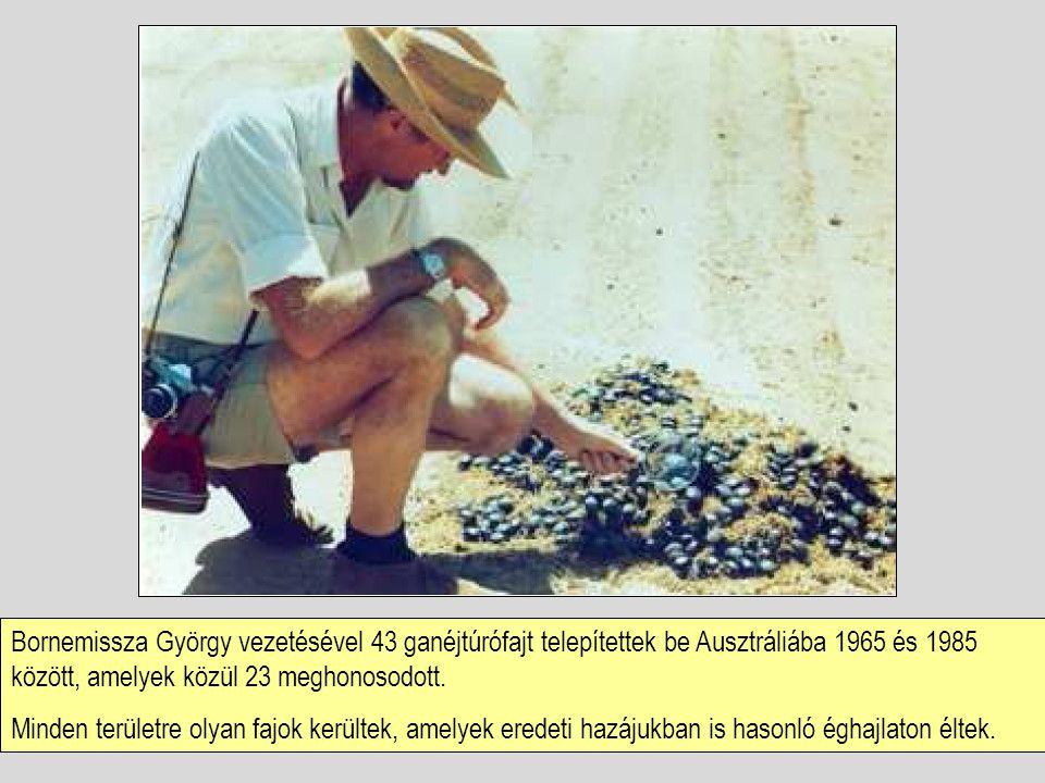Bornemissza György vezetésével 43 ganéjtúrófajt telepítettek be Ausztráliába 1965 és 1985 között, amelyek közül 23 meghonosodott.