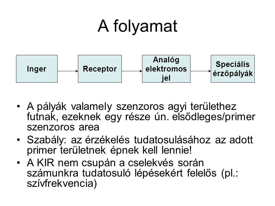 A folyamat Inger. Receptor. Analóg. elektromos. jel. Speciális. érzőpályák.