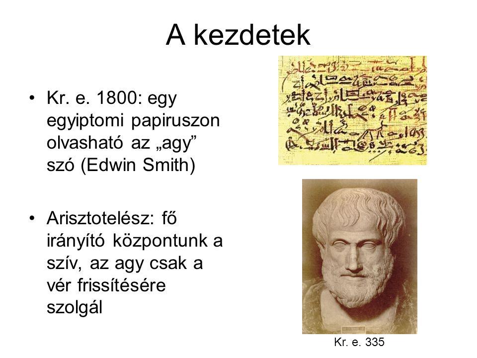"""A kezdetek Kr. e. 1800: egy egyiptomi papiruszon olvasható az """"agy szó (Edwin Smith)"""
