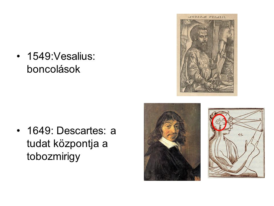 1549:Vesalius: boncolások