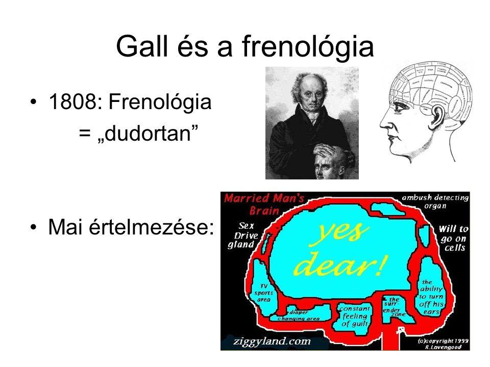 """Gall és a frenológia 1808: Frenológia = """"dudortan Mai értelmezése:"""
