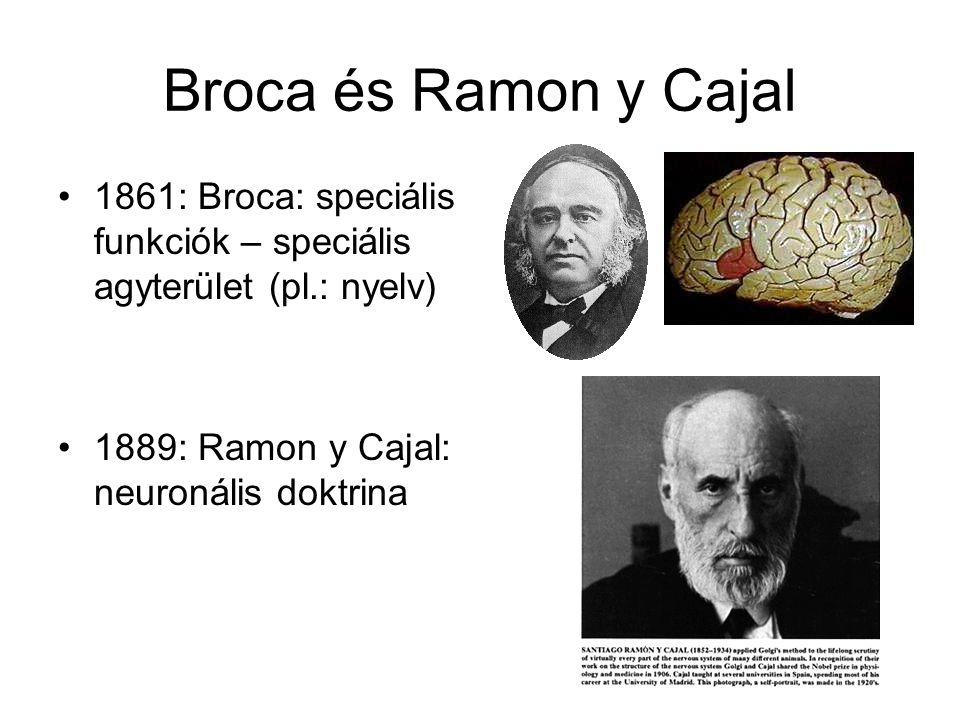 Broca és Ramon y Cajal 1861: Broca: speciális funkciók – speciális agyterület (pl.: nyelv) 1889: Ramon y Cajal: neuronális doktrina.
