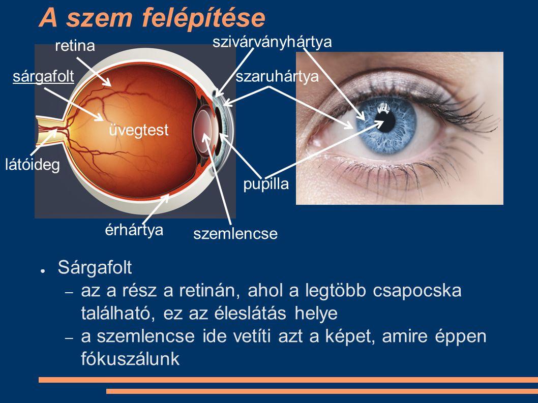A szem felépítése Sárgafolt