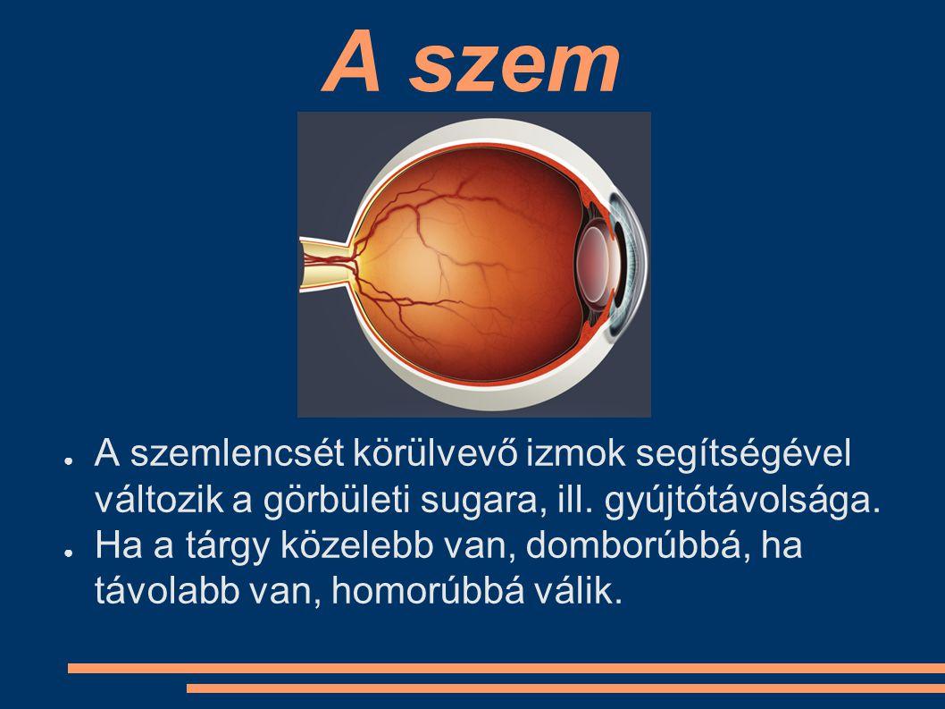 A szem A szemlencsét körülvevő izmok segítségével változik a görbületi sugara, ill. gyújtótávolsága.