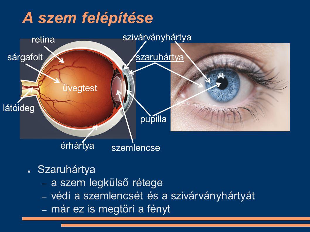 A szem felépítése Szaruhártya a szem legkülső rétege