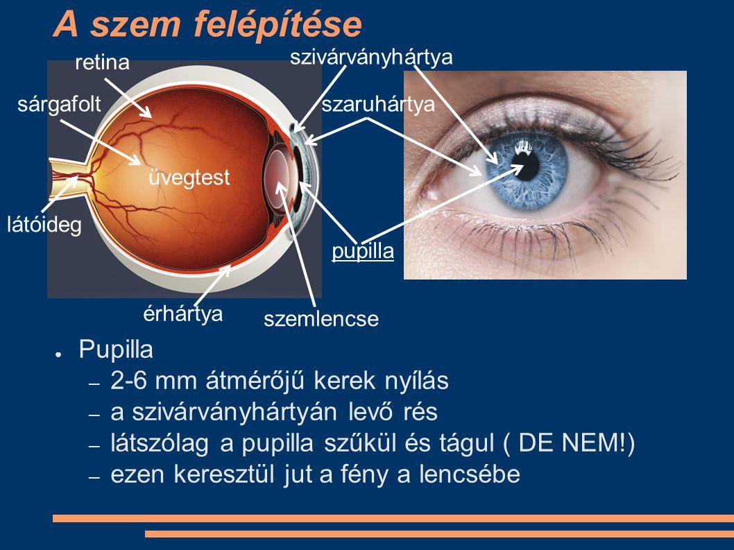 A szem felépítése Pupilla 2-6 mm átmérőjű kerek nyílás