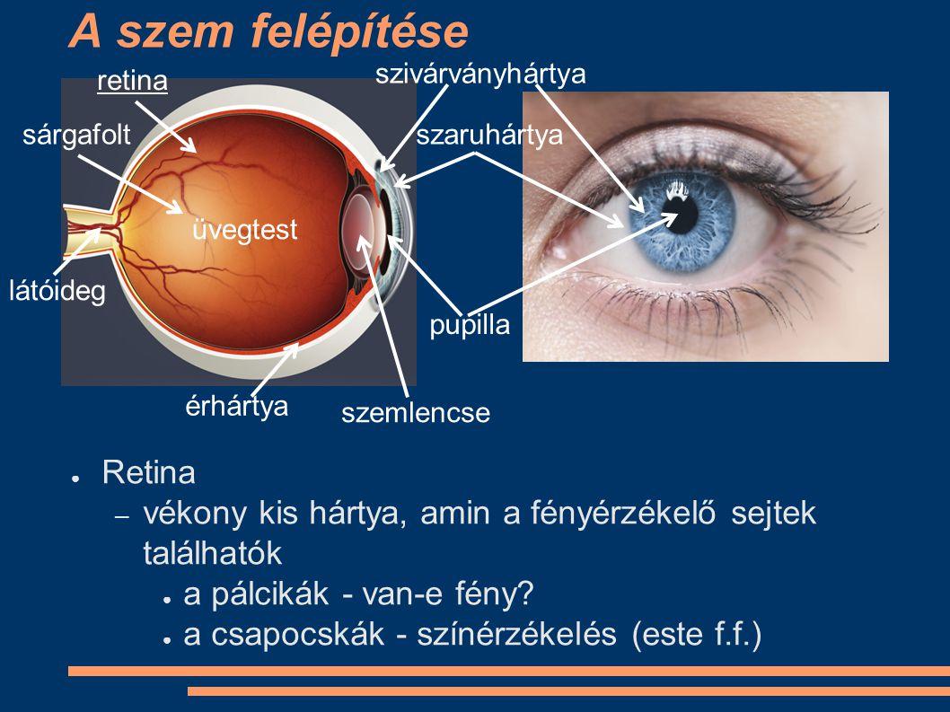 A szem felépítése Retina