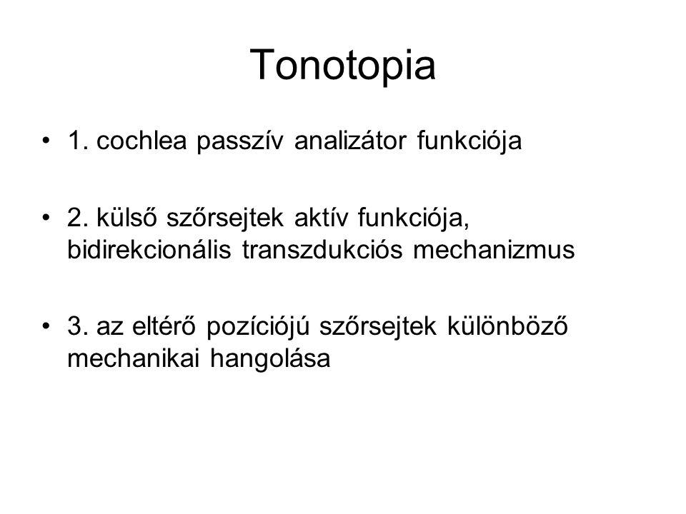 Tonotopia 1. cochlea passzív analizátor funkciója
