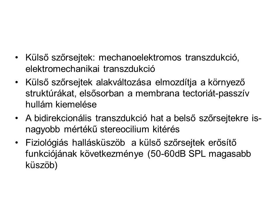 Külső szőrsejtek: mechanoelektromos transzdukció, elektromechanikai transzdukció