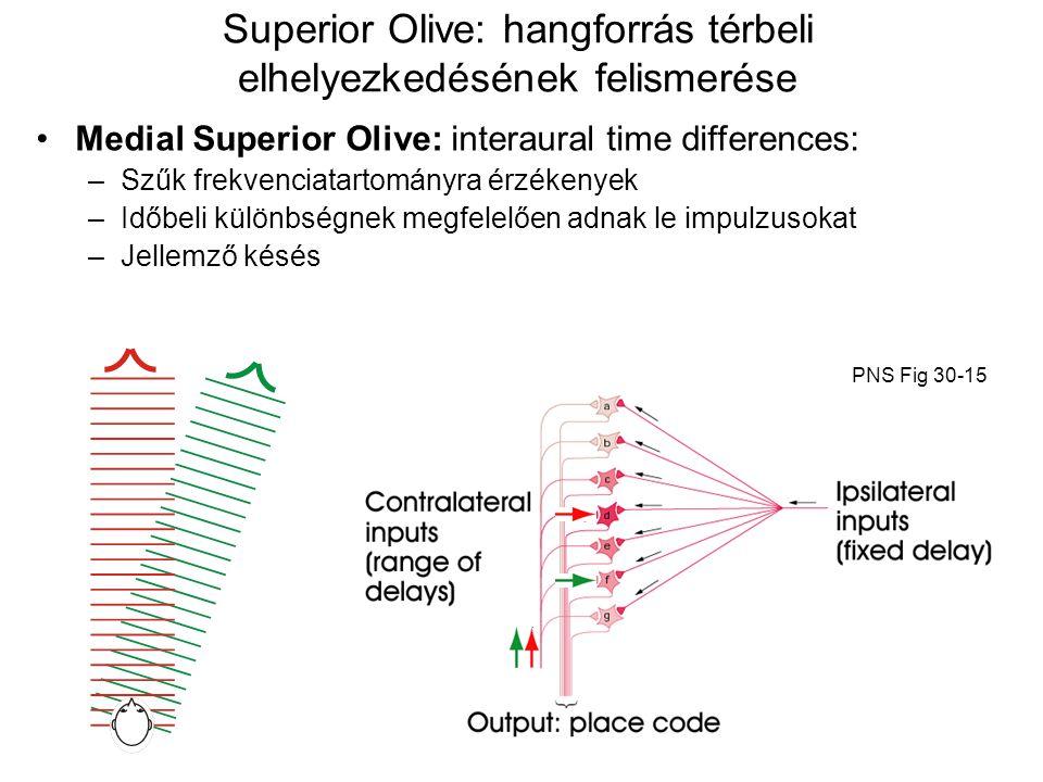 Superior Olive: hangforrás térbeli elhelyezkedésének felismerése