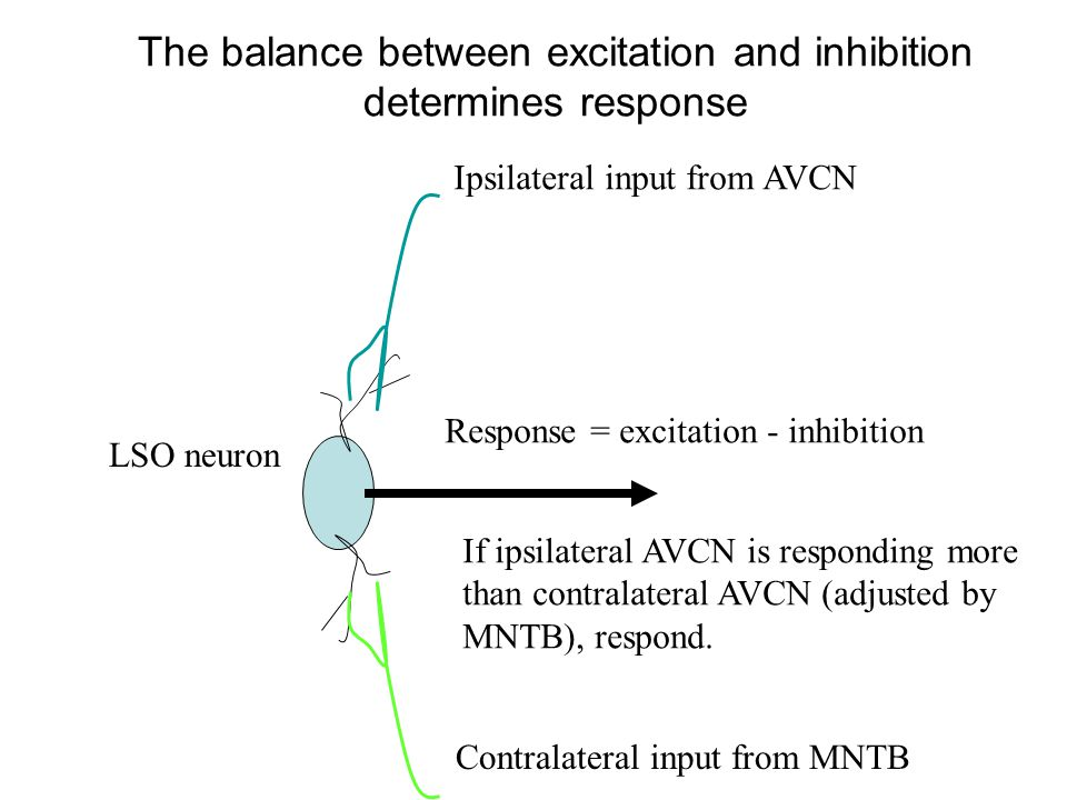 The balance between excitation and inhibition determines response