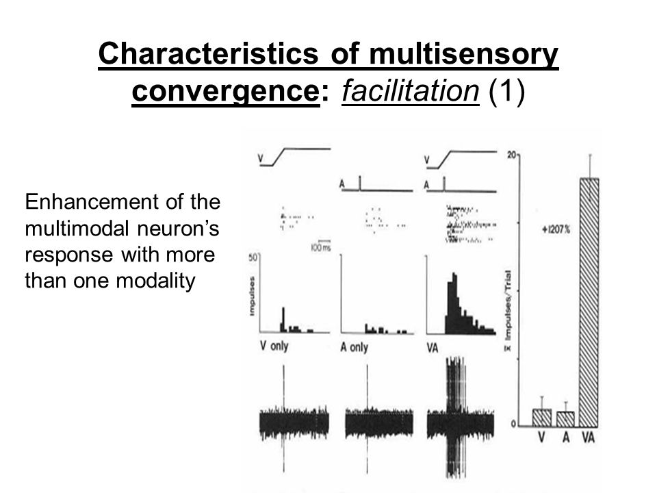 Characteristics of multisensory convergence: facilitation (1)