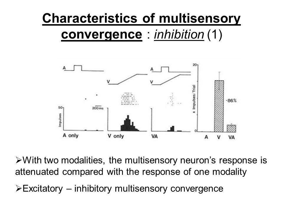 Characteristics of multisensory convergence : inhibition (1)