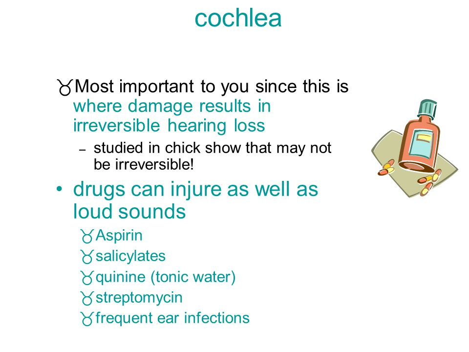 the peripheral system=the cochlea