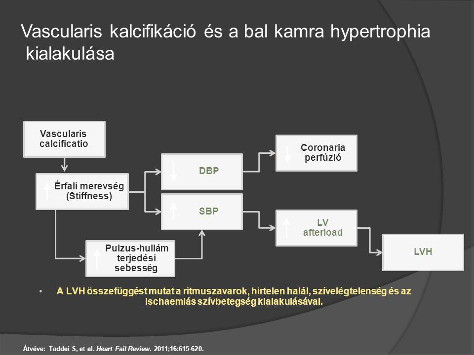 Vascularis kalcifikáció és a bal kamra hypertrophia kialakulása