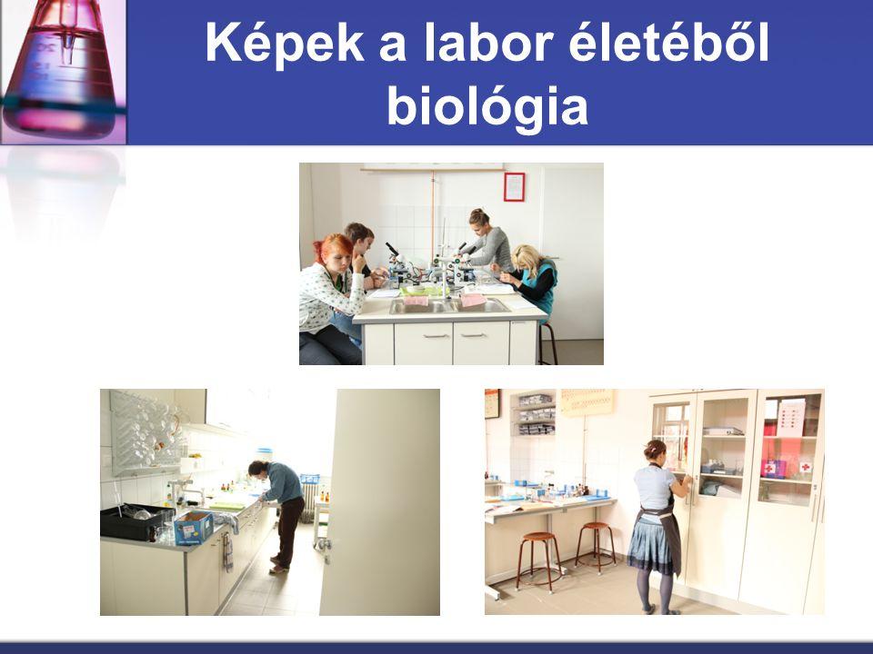 Képek a labor életéből biológia