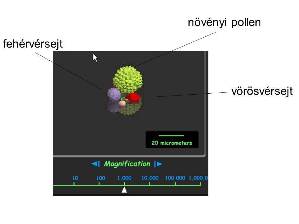 növényi pollen fehérvérsejt vörösvérsejt