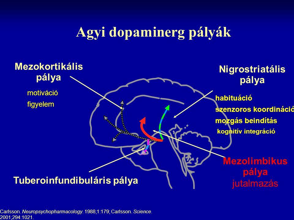 Agyi dopaminerg pályák