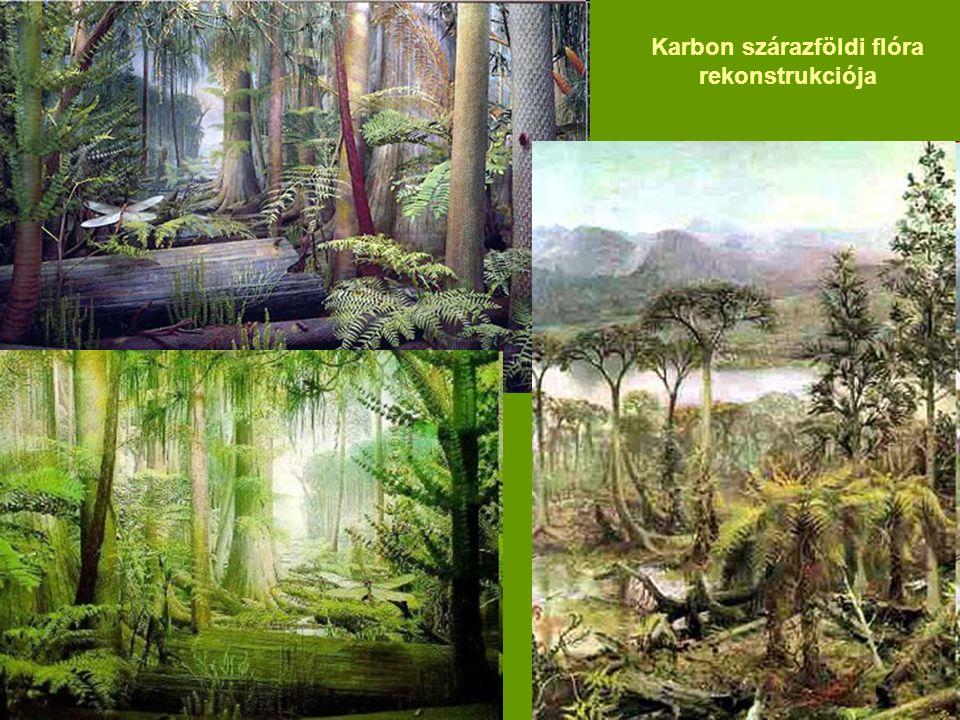 Karbon szárazföldi flóra rekonstrukciója