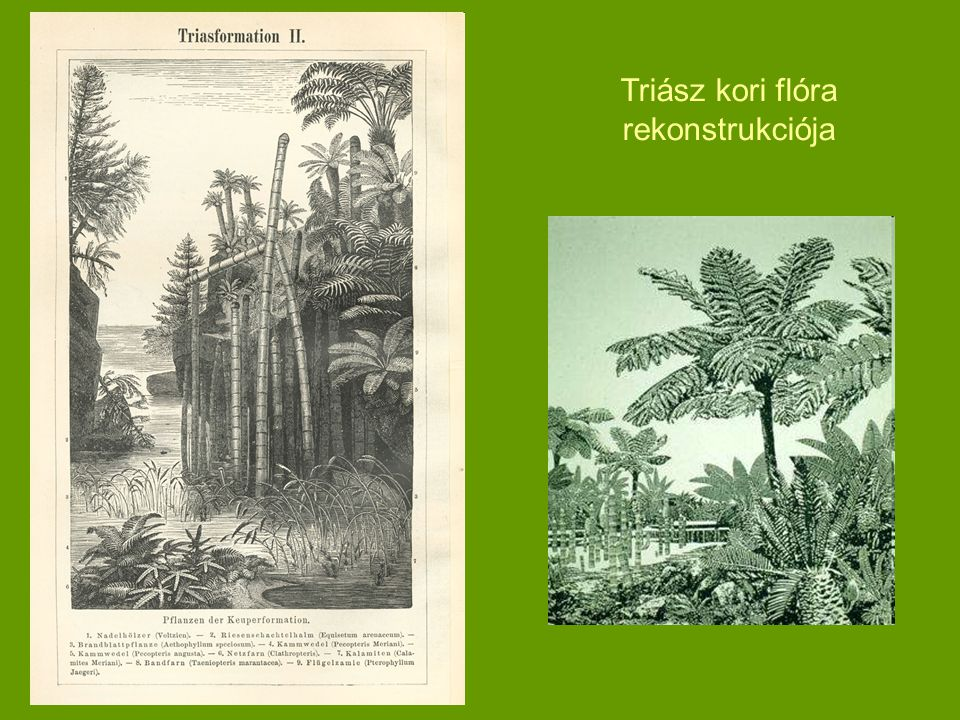 Triász kori flóra rekonstrukciója