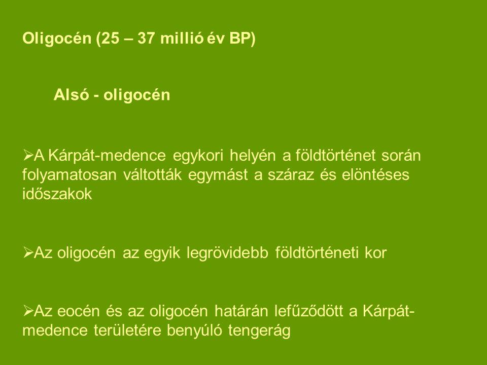 Oligocén (25 – 37 millió év BP)