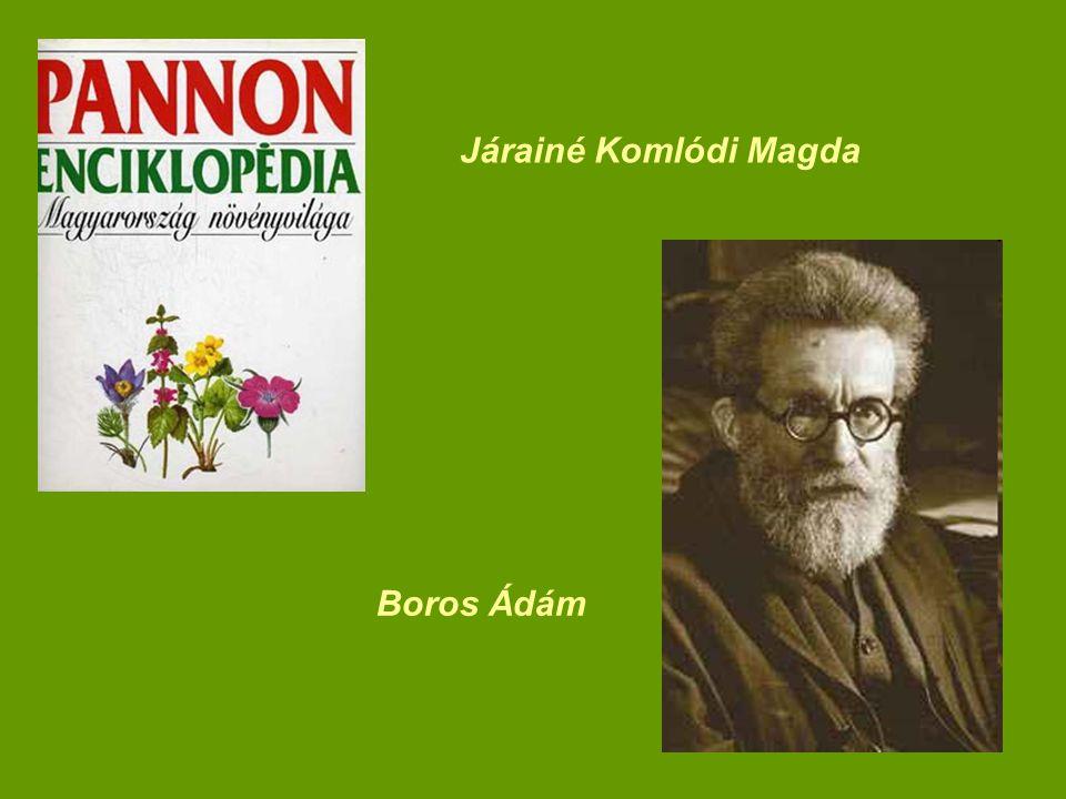 Járainé Komlódi Magda Boros Ádám