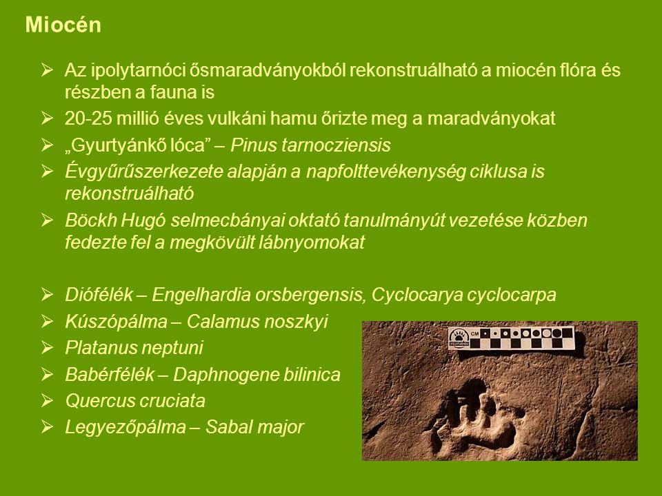 Miocén Az ipolytarnóci ősmaradványokból rekonstruálható a miocén flóra és részben a fauna is.