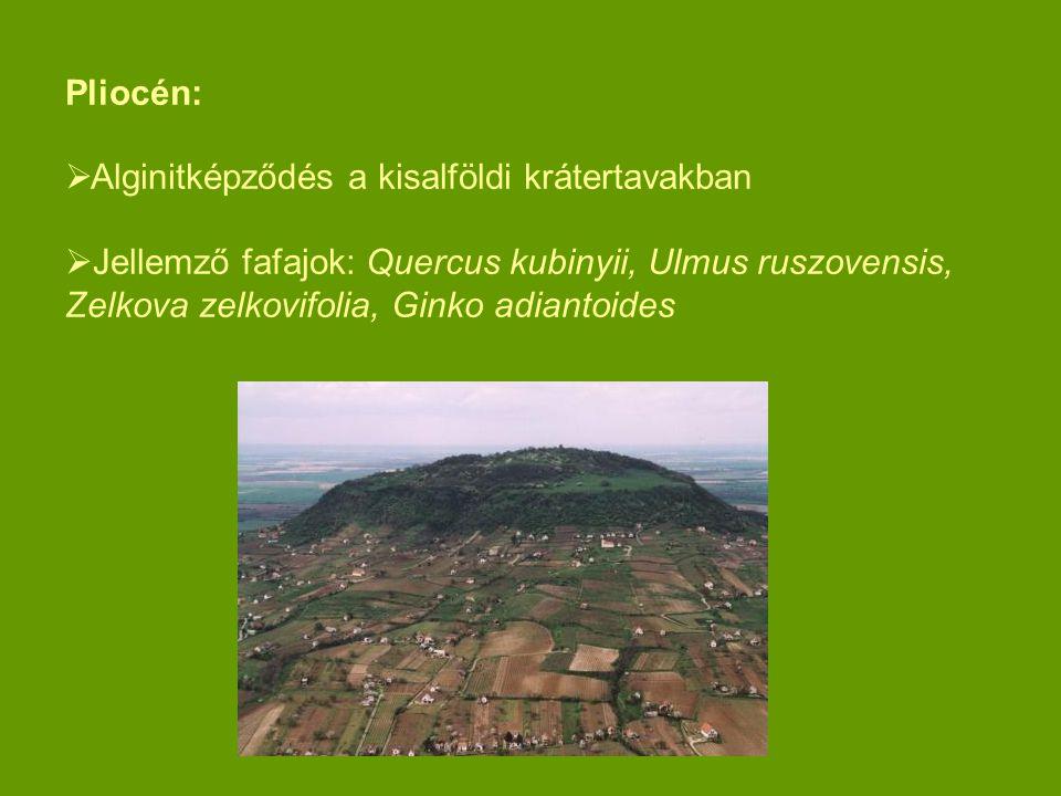 Pliocén: Alginitképződés a kisalföldi krátertavakban.