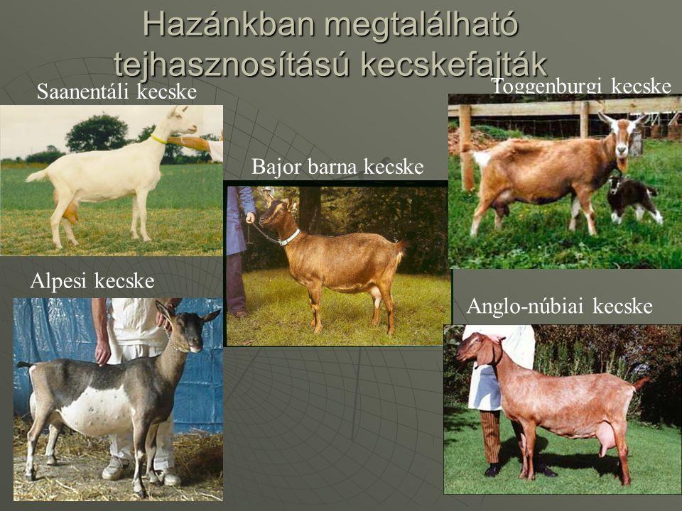 Hazánkban megtalálható tejhasznosítású kecskefajták
