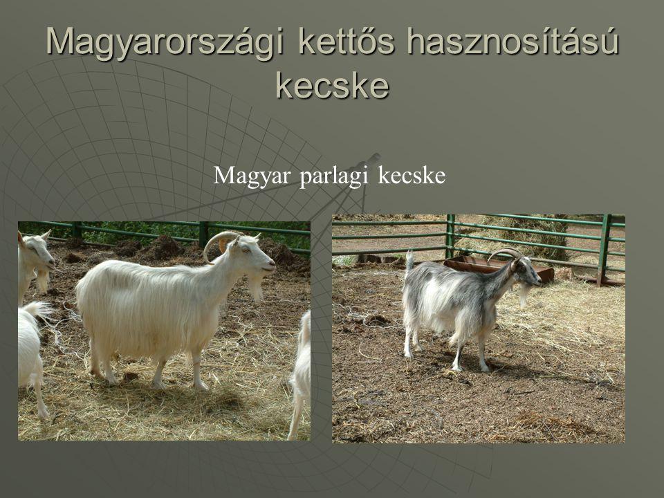 Magyarországi kettős hasznosítású kecske