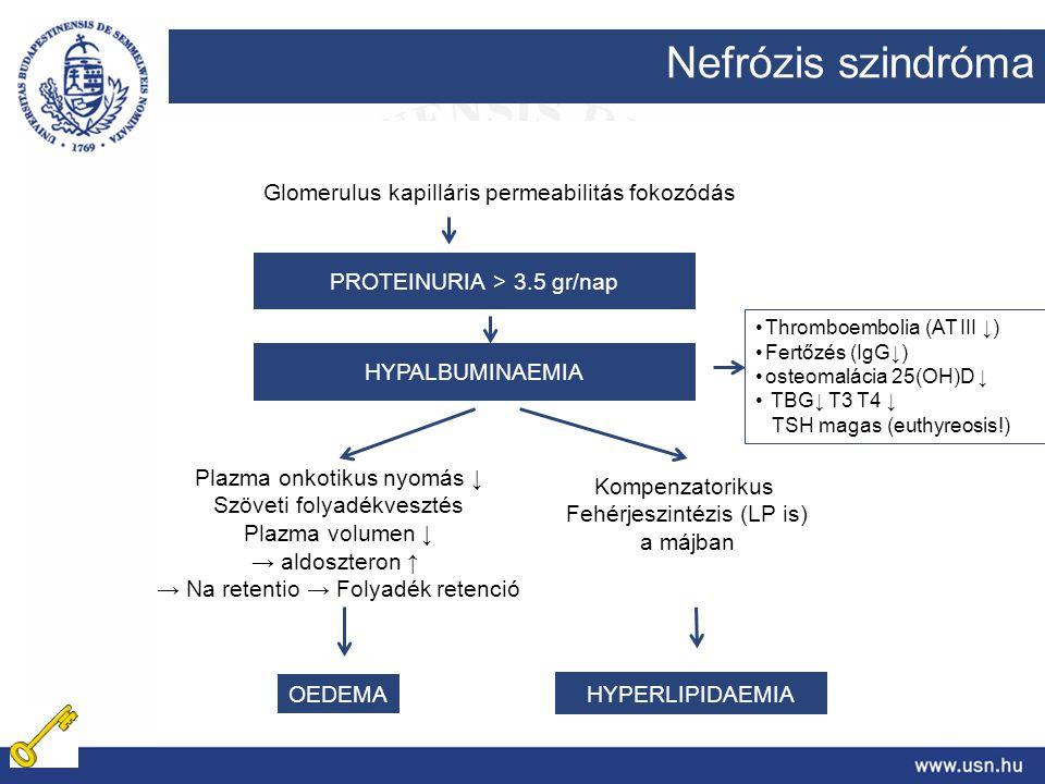 Nefrózis szindróma Glomerulus kapilláris permeabilitás fokozódás