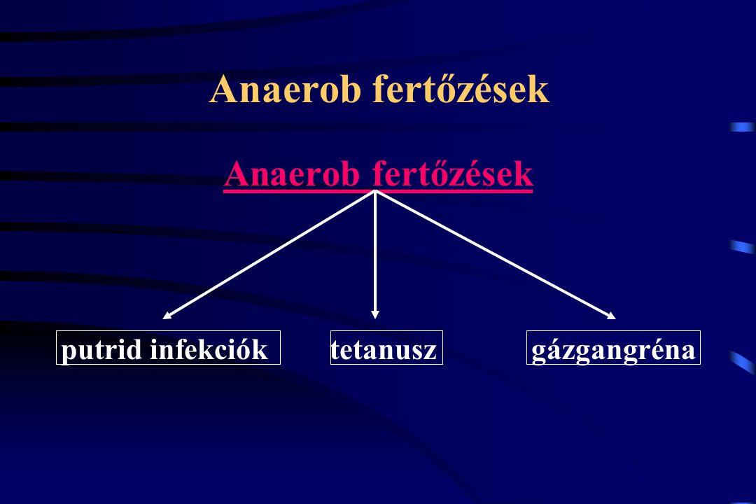 putrid infekciók tetanusz gázgangréna