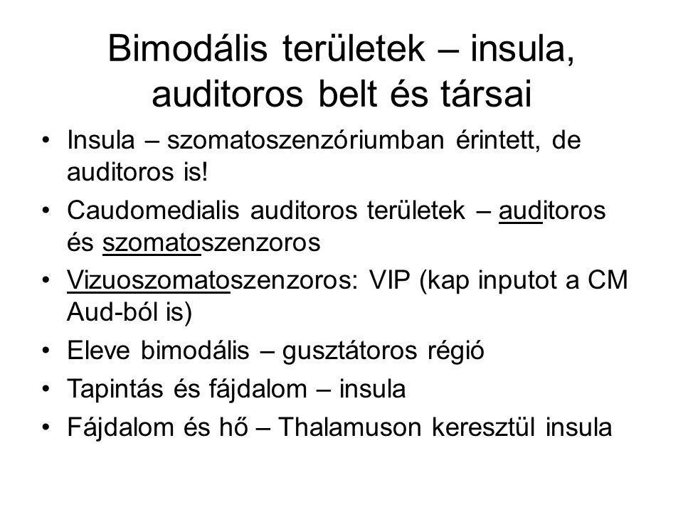 Bimodális területek – insula, auditoros belt és társai