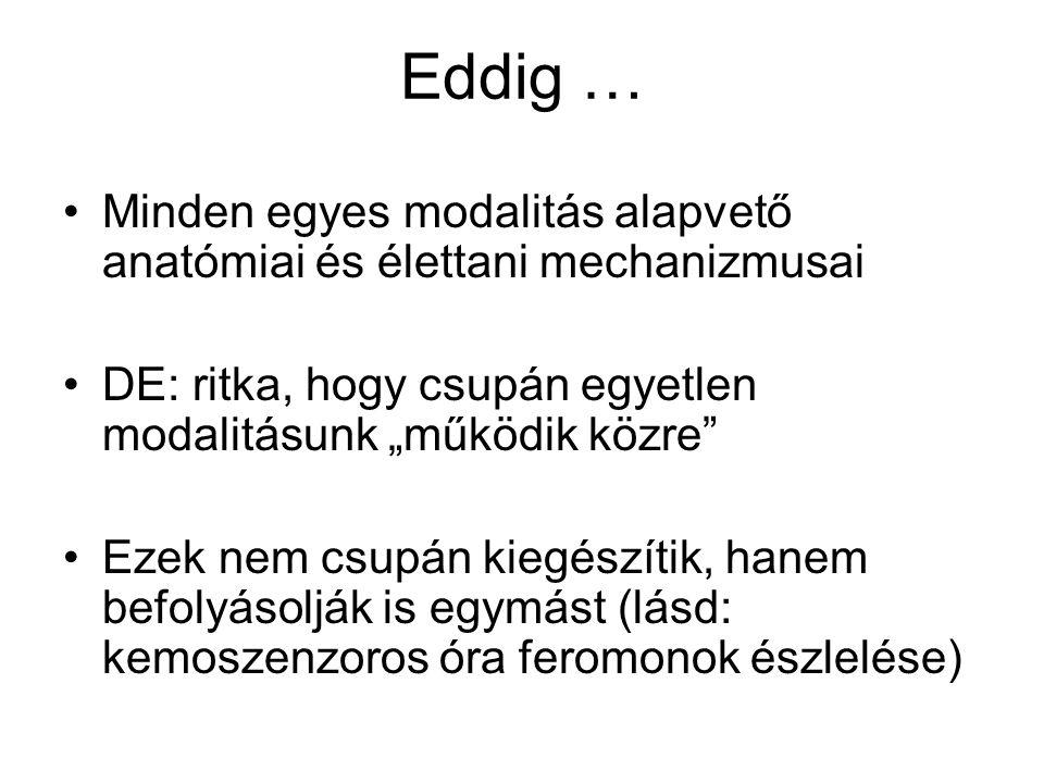 """Eddig … Minden egyes modalitás alapvető anatómiai és élettani mechanizmusai. DE: ritka, hogy csupán egyetlen modalitásunk """"működik közre"""