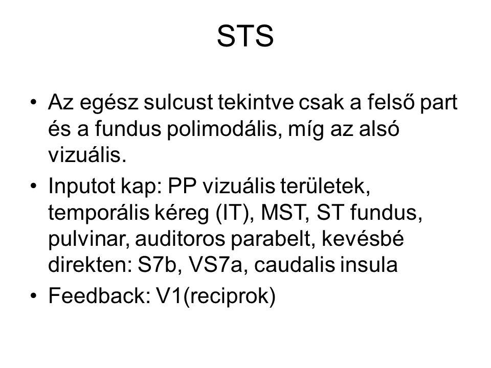 STS Az egész sulcust tekintve csak a felső part és a fundus polimodális, míg az alsó vizuális.