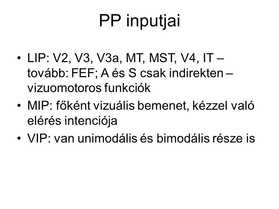 PP inputjai LIP: V2, V3, V3a, MT, MST, V4, IT – tovább: FEF; A és S csak indirekten – vizuomotoros funkciók.