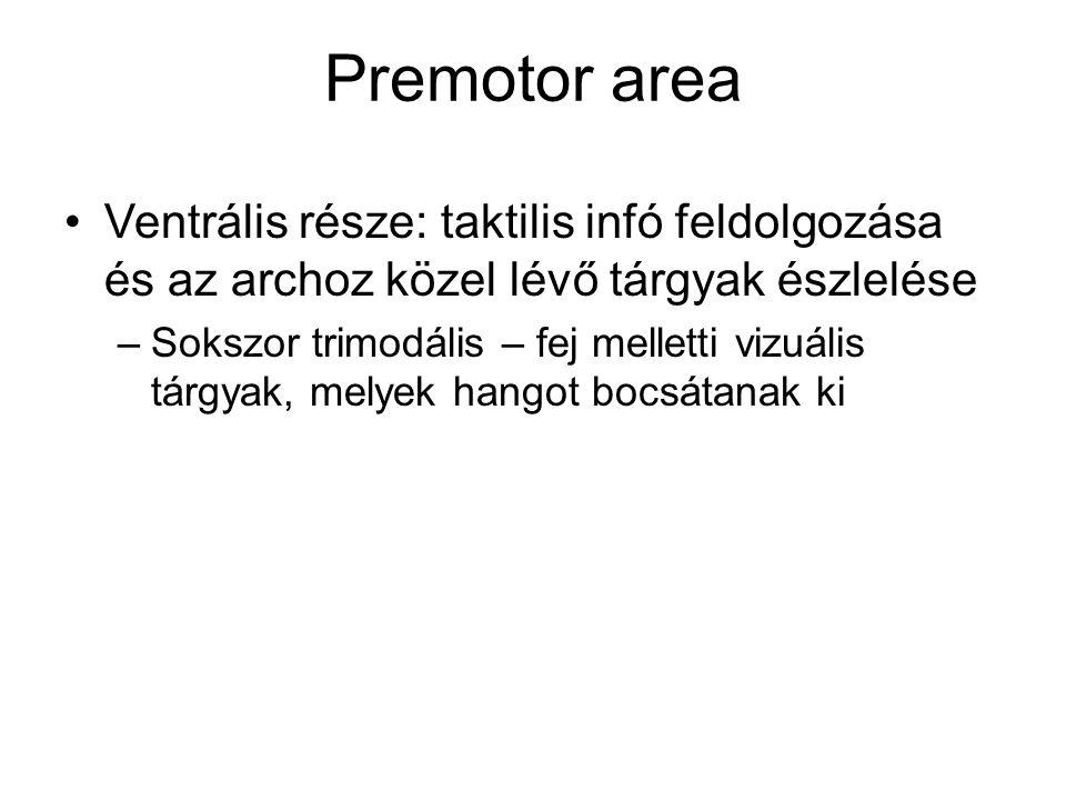 Premotor area Ventrális része: taktilis infó feldolgozása és az archoz közel lévő tárgyak észlelése.