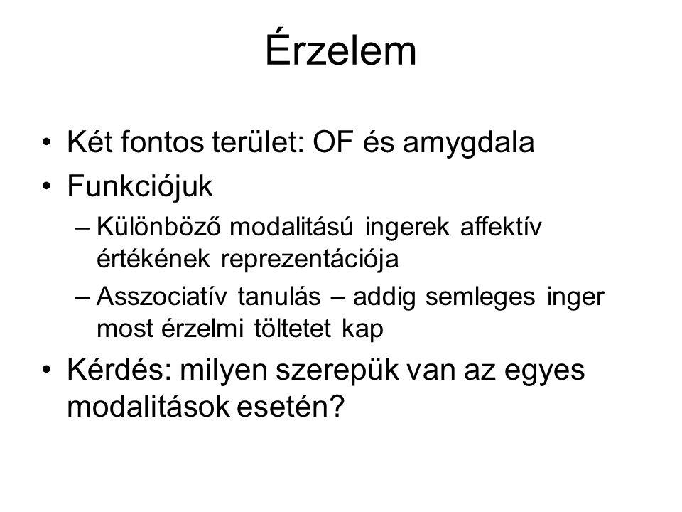 Érzelem Két fontos terület: OF és amygdala Funkciójuk