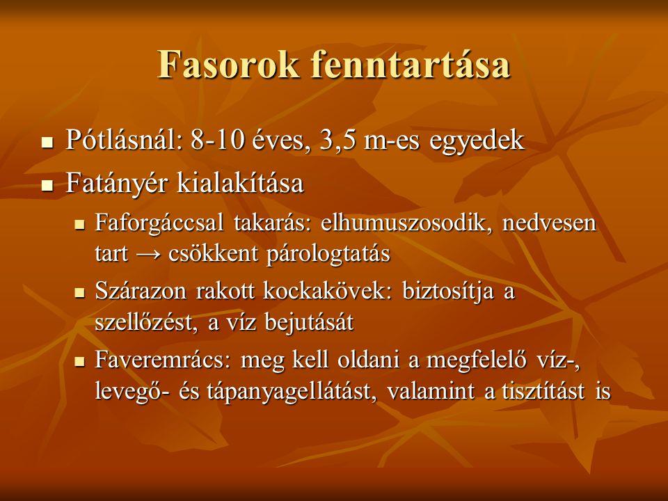 Fasorok fenntartása Pótlásnál: 8-10 éves, 3,5 m-es egyedek