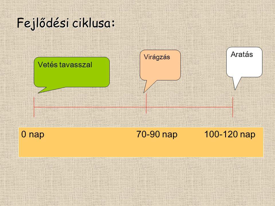Fejlődési ciklusa: 0 nap 70-90 nap 100-120 nap Aratás Vetés tavasszal