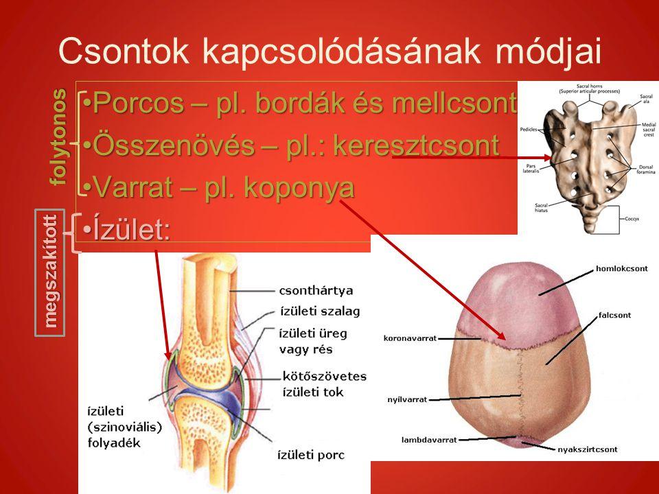 Csontok kapcsolódásának módjai