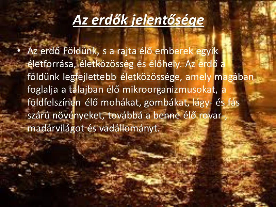 Az erdők jelentősége